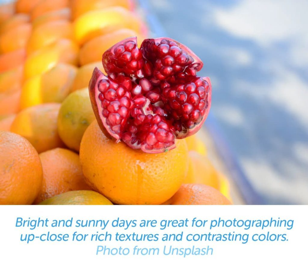 Bright and sunny days are great for photographing up-close for rich textures and contrasting colors.